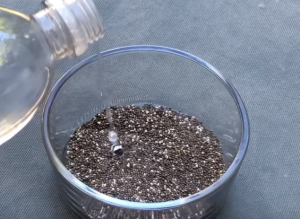rinsing chia seeds with water