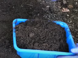 putting soil in a plastic bucket