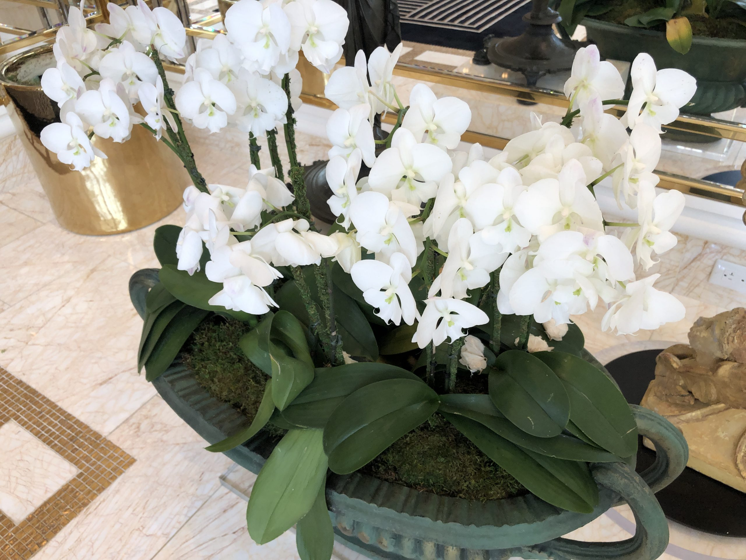 white orchid flowers blooming 1