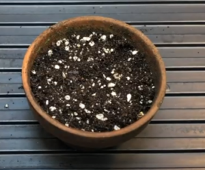 perlite, garden soil composition for growing tomato plant