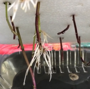 root after relocation