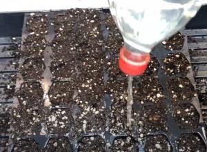 spraying some water