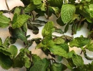 dead,dying mint leaves