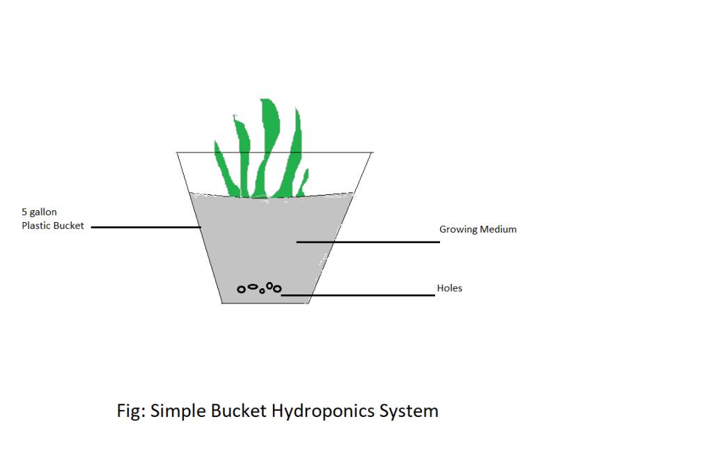 simple bucket hydroponics