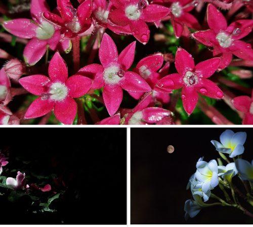 Top 12 Flowering Plants For Night Garden (Moon Garden)