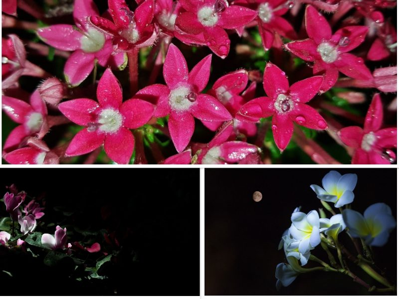 Top 12 Flowering Plants For Night Garden (Moon Garden)