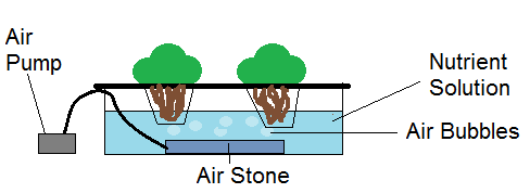 water culture technique