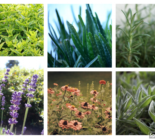 The Healing Garden: Top 12 Must Have Medicinal Herbs At Your Home Garden