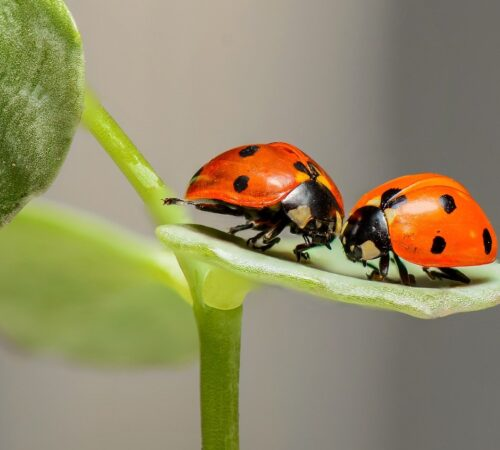 Beneficial insects on your backyard