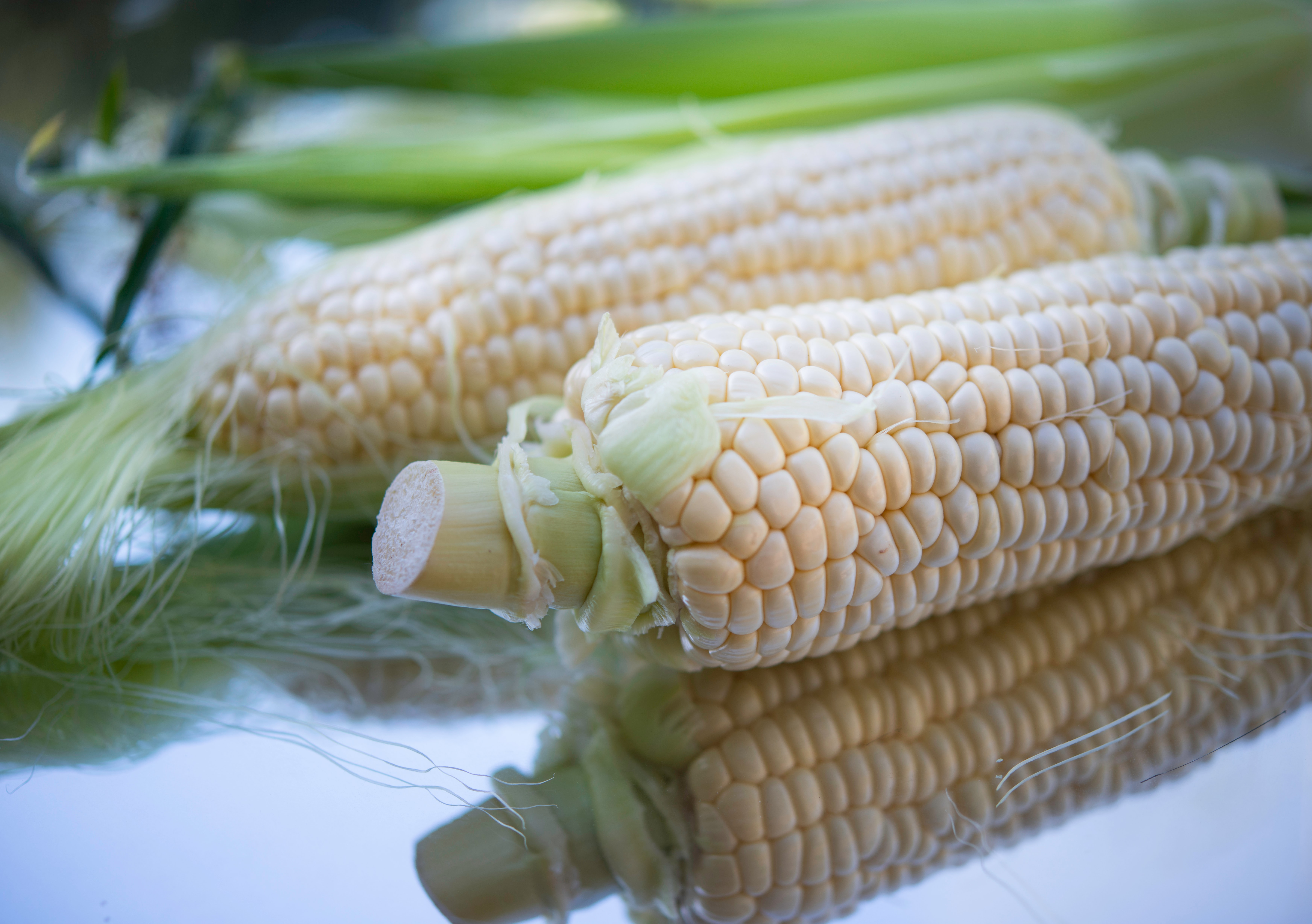 EASY WAY TO GROW CORN IN YOUR BACKYARD - Lean Agro