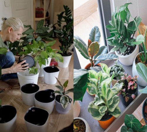 Helpful Gardening Techniques for Indoor Plants.