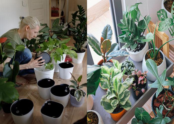 Helpful Gardening Techniques for Indoor Plants.