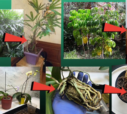Why We Usually Fail To Maintain Indoor House Plants And It's Remedies