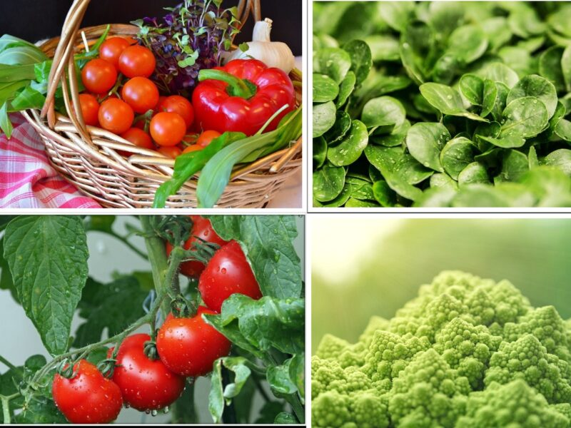 A Complete Guide on Vegetable Container Gardening