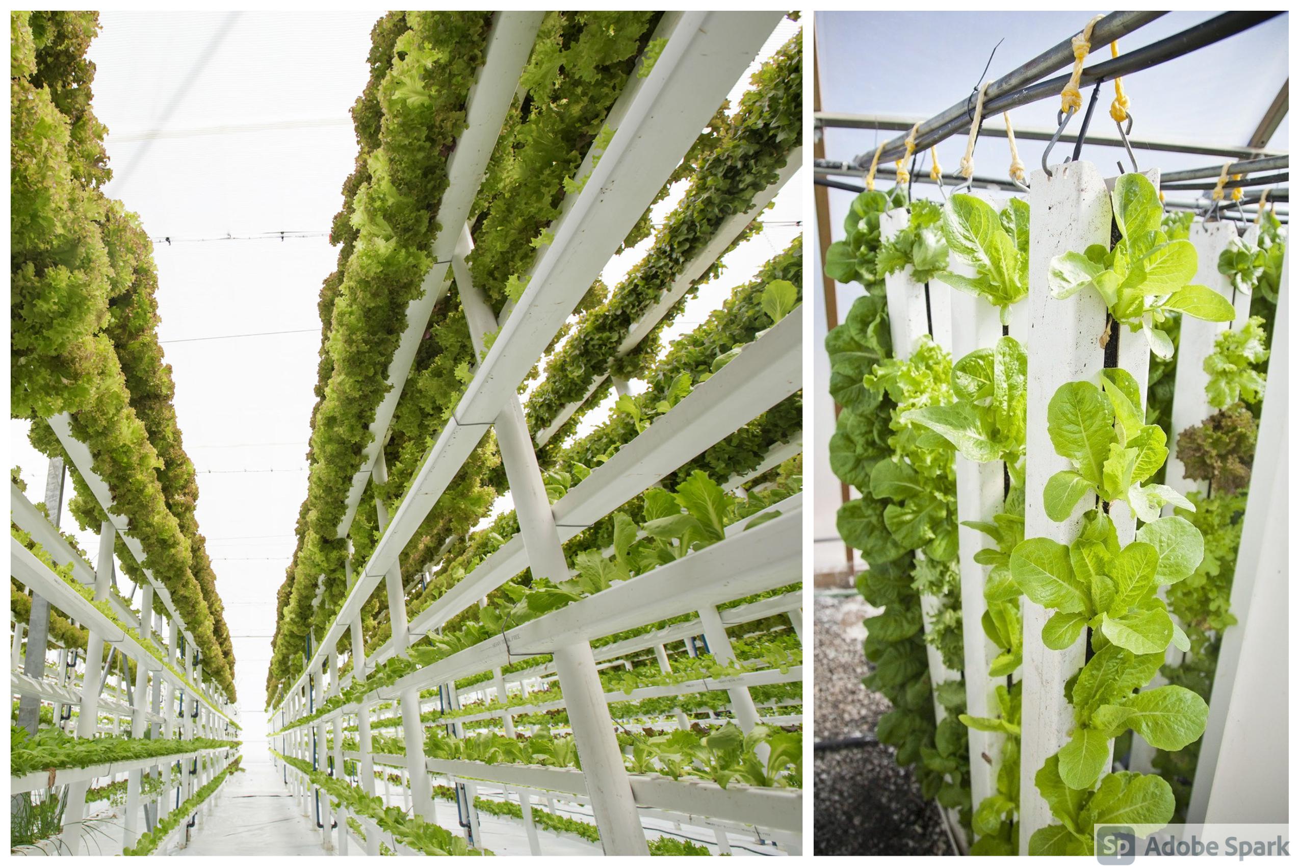 Indoor vertical farming: Future of farming