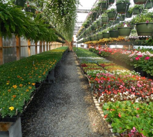 Things to consider before building Greenhouse