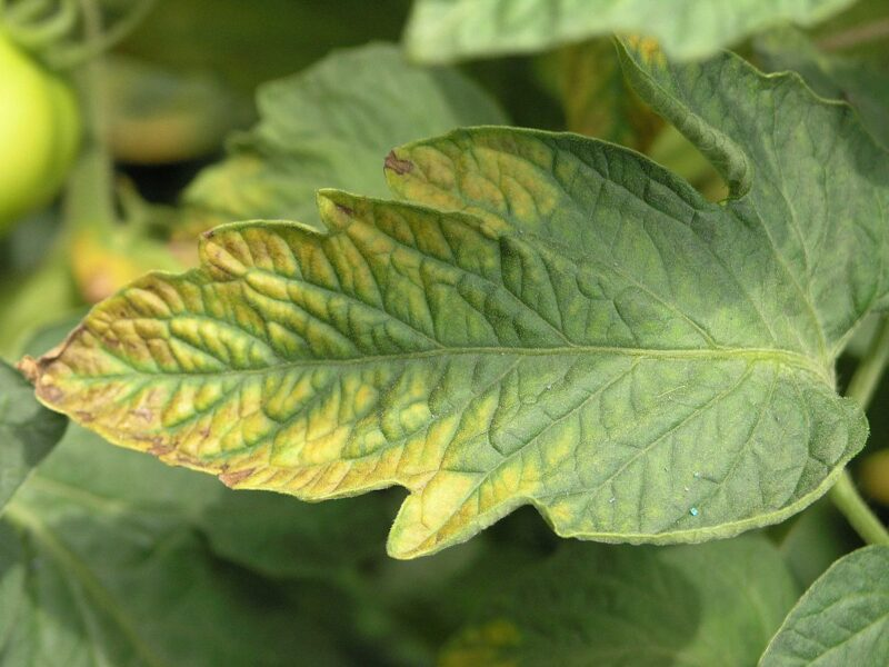 Nutrition deficiency in plants