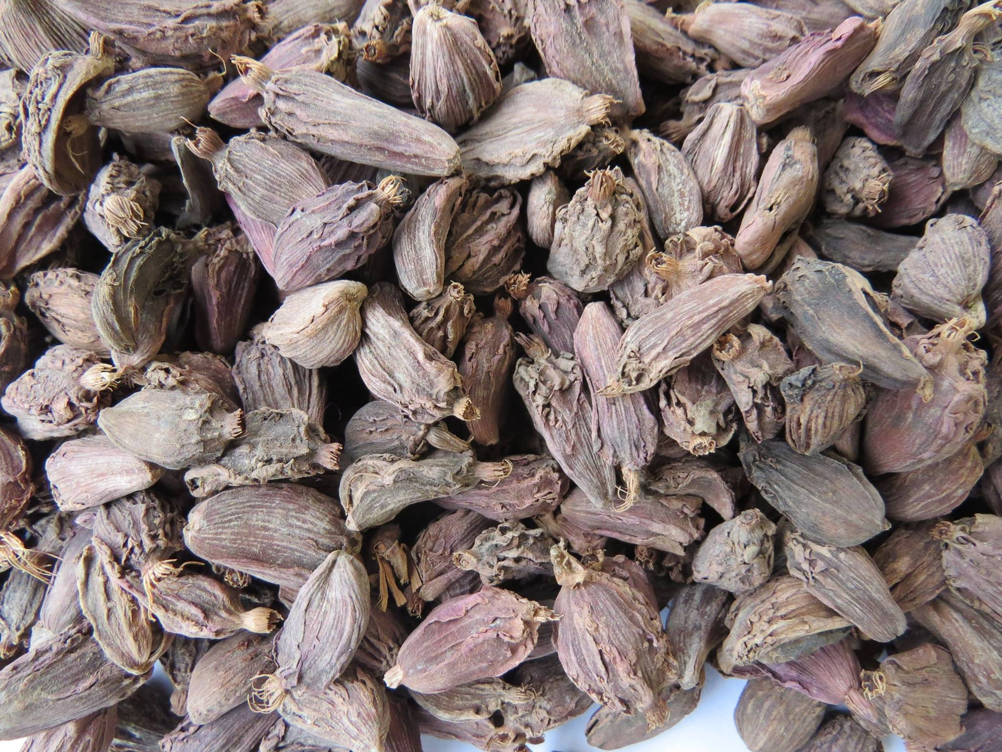 Growing Organic Smoked Spice – Black Cardamom