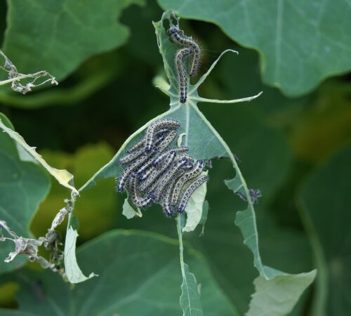 Integrated Pest Management strategies to control pests