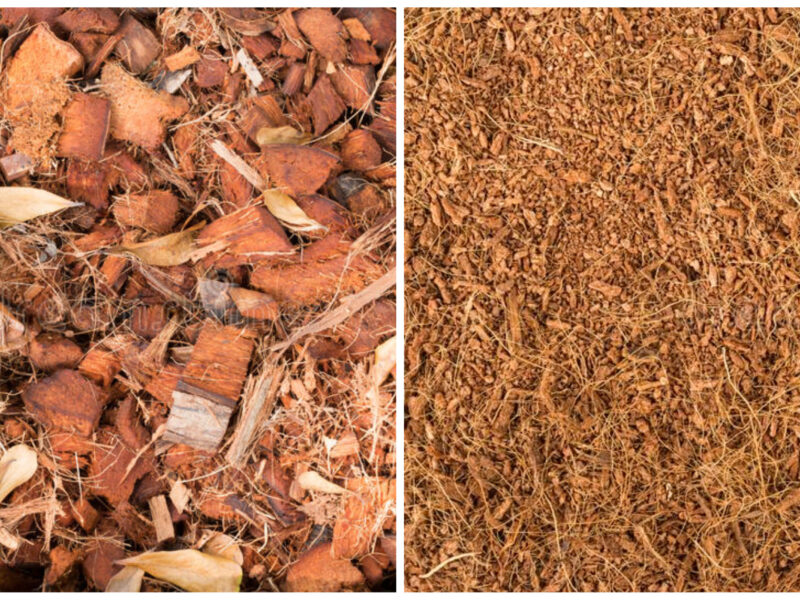 All Facts On Cocopeat (Coco Soil / Coconut Coir)