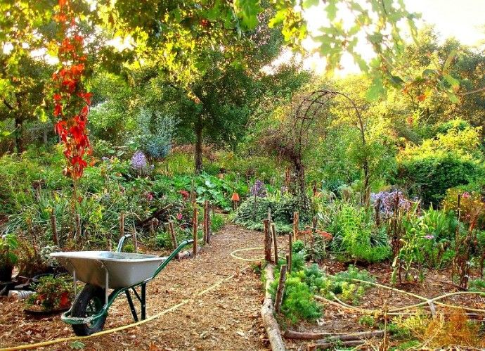 Beginners Guide for Permaculture Gardening