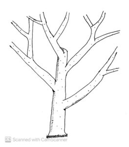 modified-leader-system-of-training-trees