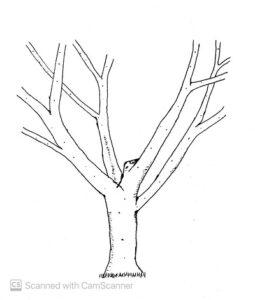 open-vase-system-of-training-trees