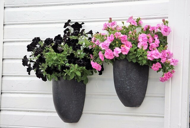 Petunia Flower: Planting From Seeds and Care Guide