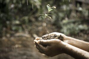 soil-seedling